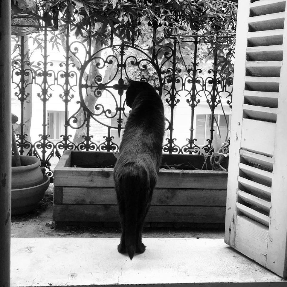 Balkis, Reine de Saba, magicienne bienveillante, rien n'est plus beau qu'un chat noir