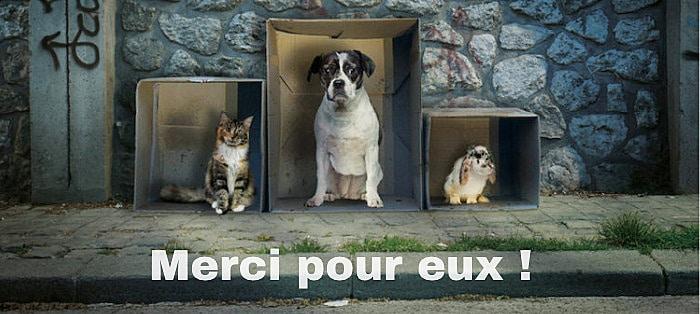 Donner pour les animaux abandonnés